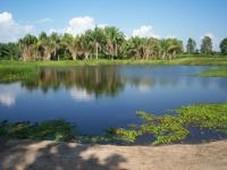 finca en venta en fundación, magdalena - 8 hectareas - 130.000.000 - fiv44917 - bienesonline